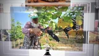Mey İçki Kayra Şarap Kulübü  Kurumsal İmaj Filmi