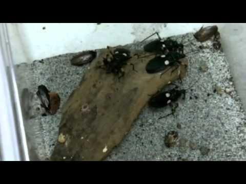 Viaggio nel mondo degli insetti - teleTERRARISTI - 2/2
