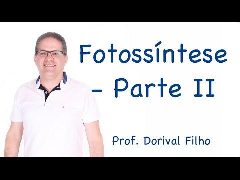 Fotossíntese - Parte II