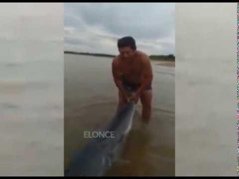 Un ejemplo: Pescó un enorme surubí de 75 kilos y lo devolvió al río Paraná