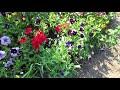 Фрагмент с середины видео VLOG/ОГОРОДНЫЕ ДЕЛА/РУЛЕТ ИЗ ЛАВАША С КОНСЕРВАМИ