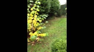 Vidéo : iPad mini caméra avant
