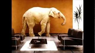 The Elephant In Living Room