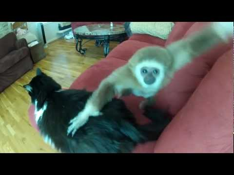 Monkey Plays With Cat