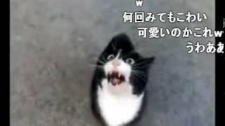 思いっきり日本語を話している猫