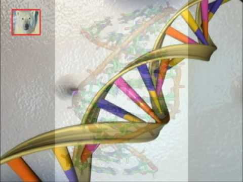 OGM - organismi geneticamente modificati, il DNA - prima parte,