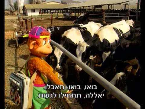 קופיקו עונה 1 פרק 10 - איזו הקלטה