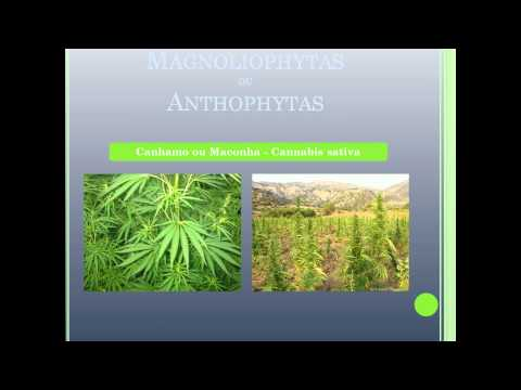 atlas de plantas.wmv