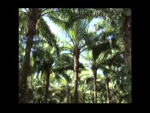 Un Verde Mas Oscuro: REDD y El Futuro de Los Bosques