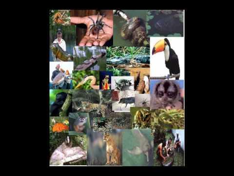 Video Científico: La deforestación