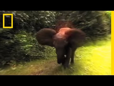 Survival Guide: Elephant Charge -L-DM5Go6UYE