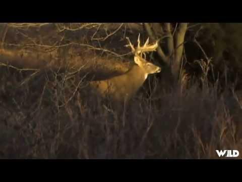 Whitetail Deer Hunting in Kansas