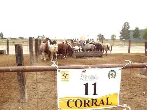 Corral 11