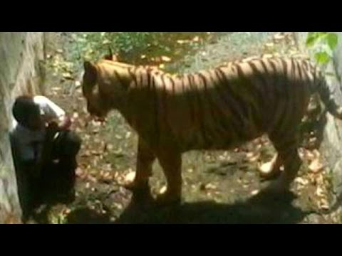 Youth attacked by Tiger in Delhi zoo