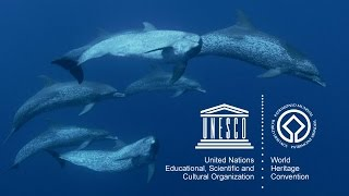 UNESCO's Marine World Heritage