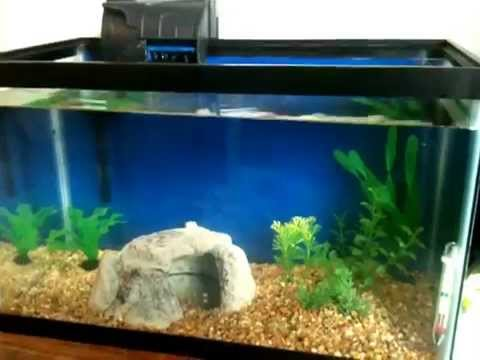 Fish-less cycling my 10 Gallon Aquarium