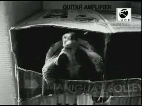 Tartaruga Mussolini - Dichiarazione di Guerra (1940)