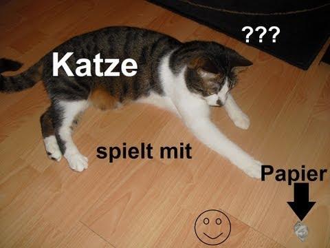 Katze spielt mit Papier...?! (Katze spielt Hund Teil 2)