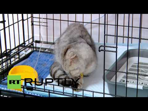 Russia: Cat trapped underground for a WEEK in purrrfect condition
