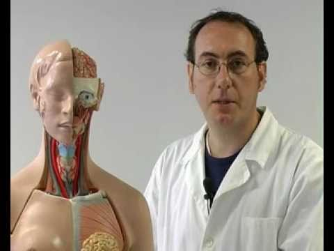 Il corpo umano (1/5) Il sistema circolatorio