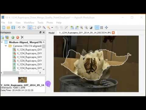 12-Photogrammetry 3D Fossils Merging Chunks Align and Quality Control of sparse cloud