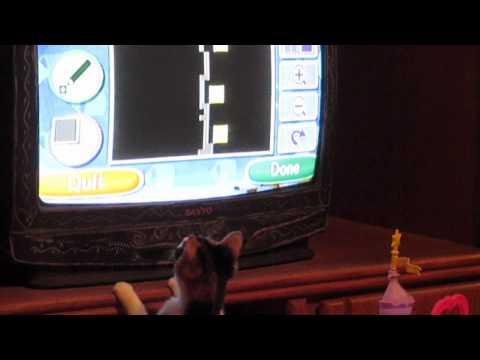 فيديو | قطة تحاول اصطياد ماوس من على شاشة التلفزيون