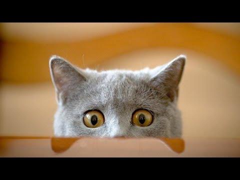 Chiêu rình mò của những chú mèo và cái kết đau cả bụng