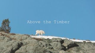 Above the Timber Trailer