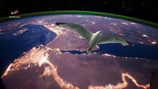 «Чайка»: первая в космосе (16.06.2019 12:34)
