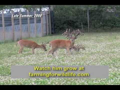 Biggest Whitetail Ever!! You gotta see this 406 score!