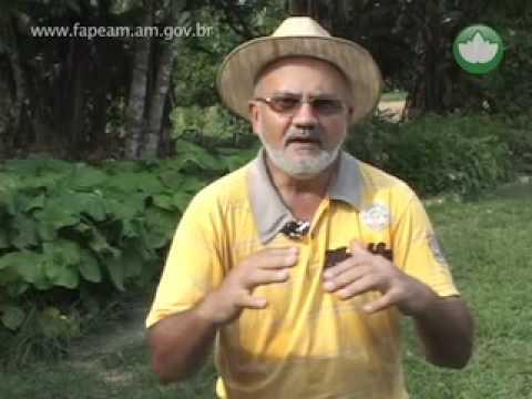 7_A ciencia responde - como fazer compostagem.mp4