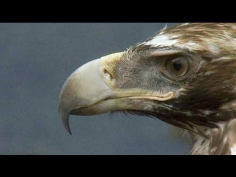 euronews science - A tutta ecologia