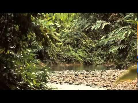 Olio di palma - Green - Documentario completo