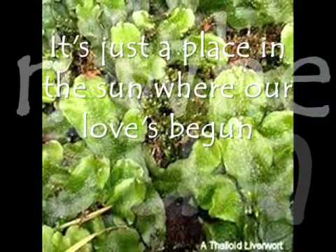 Kingdom Plantae - Darlyn Joyce Aldunar Group