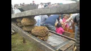como se hace la chicha de manzana en la isla de chiloé chile verano 2013 por walter manriquez