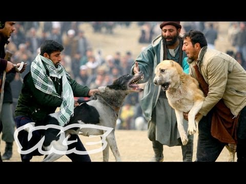 Underground Dog Fighting in Afghanistan (Part 2/3)