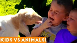 The Funniest Pets Vs Kids & Babies Fail Compilation  Funny Pet Videos