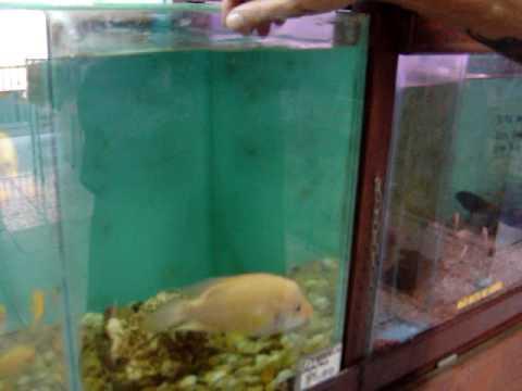 Paulinho e Bob, seu peixe de estimação