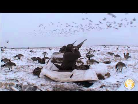 Alberta Goose Hunting In Snow-covered Blinds
