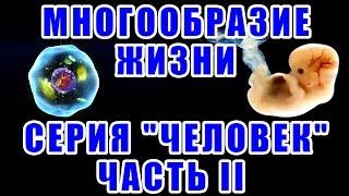 """Многообразие жизни. Серия """"Человек"""". Часть II"""