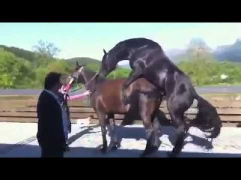 Секс с с конём видео конечно
