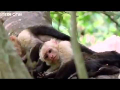 Hilarious British Animal Voiceovers