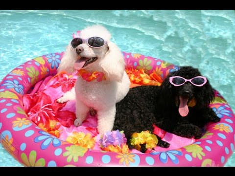 TRY NOT TO SMILE - The best animal party video - UCR2KG2dK1tAkwZZjm7rAiSg