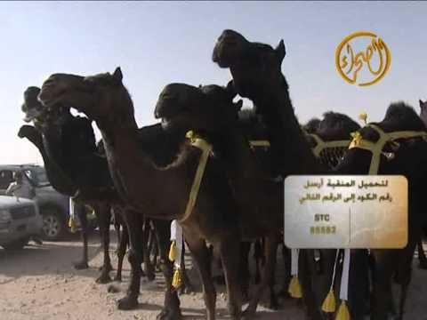 منقية الشيخ / بادي بن ناصر آل بو زمام المساعره