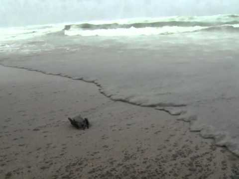 Blackened beaches threaten NZ tourism