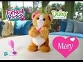Мисс Мэри и Игривый котенок Дэйзи Furreal Friends. ОБЗОР любимой игрушки