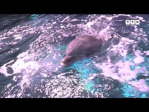 Delfini e squali - Dietro le quinte dell'Acquario di Genova
