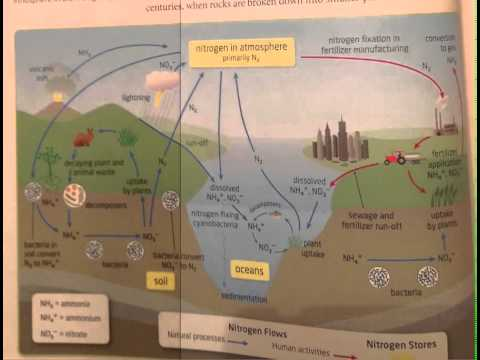 2 Nitrogen Cycle.mov