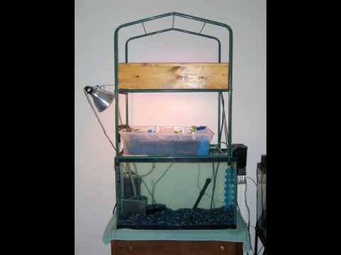 My first aquaponics setup