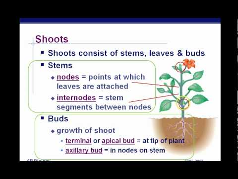 AP Biology Plant Anatomy Chapter 35 part 1